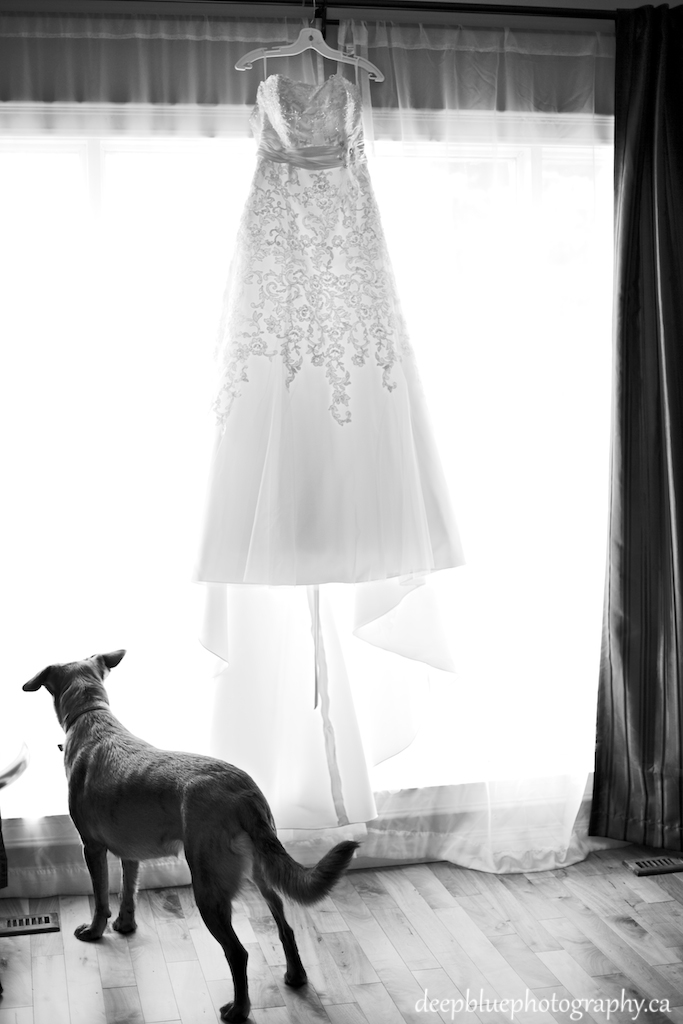 Dog Standing By Wedding Dress