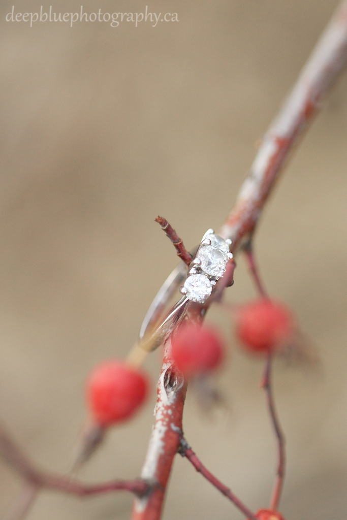 Engagement Ring Photo with Red Rose Hips