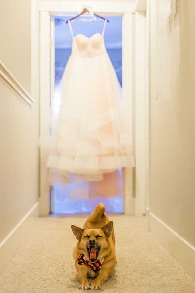 Photo of Dog with Wedding Dress