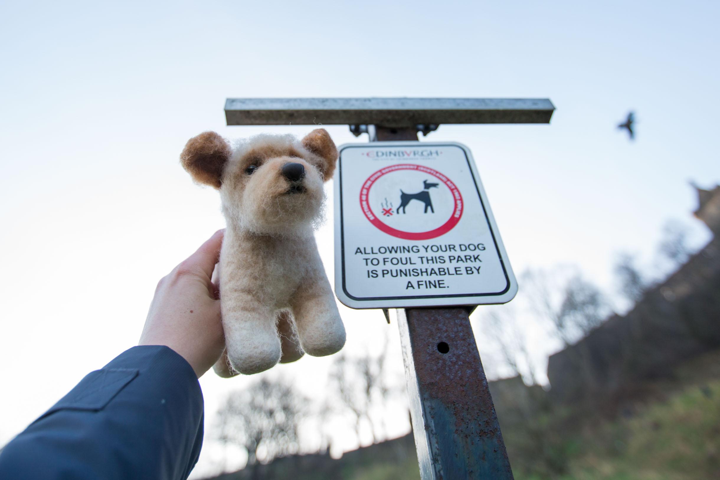 Picture Taken While Exploring Edinburgh - dog sign in edinburgh