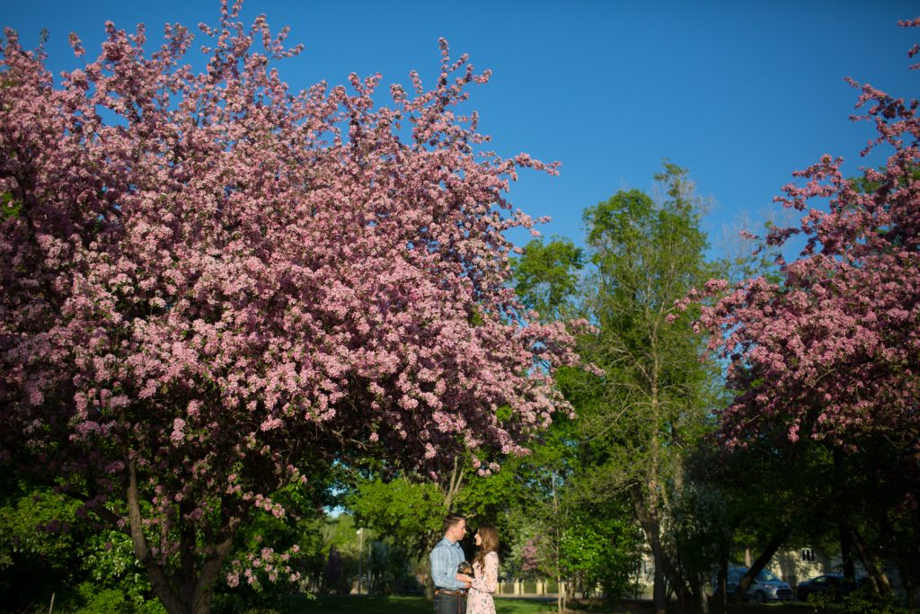 edmonton cherry blossom engagement