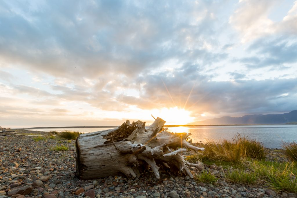 Driftwood at sunset at Lake Ferry