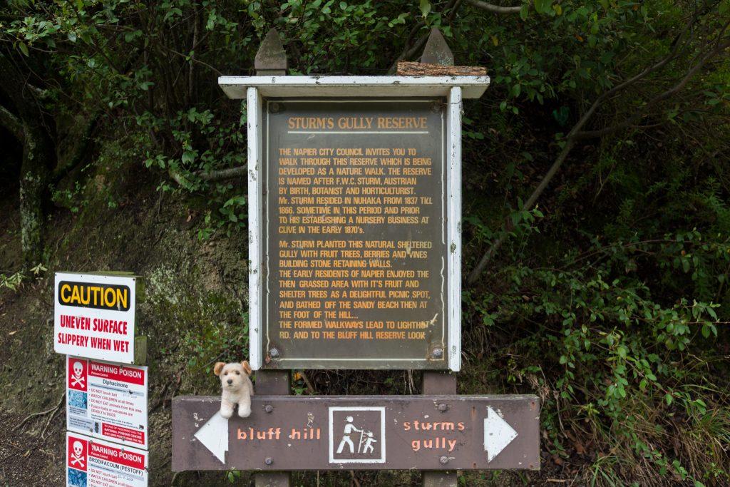 Bluff hill hike signpost