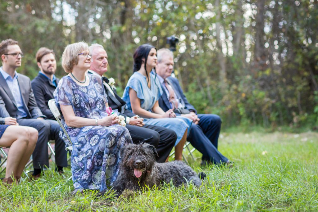 doggy ring bearer sits with parents