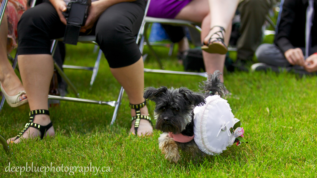 Ring bearer dog