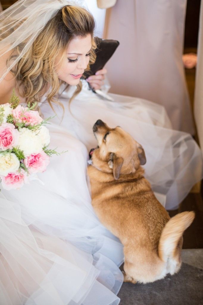 Photo of Bride and Dog