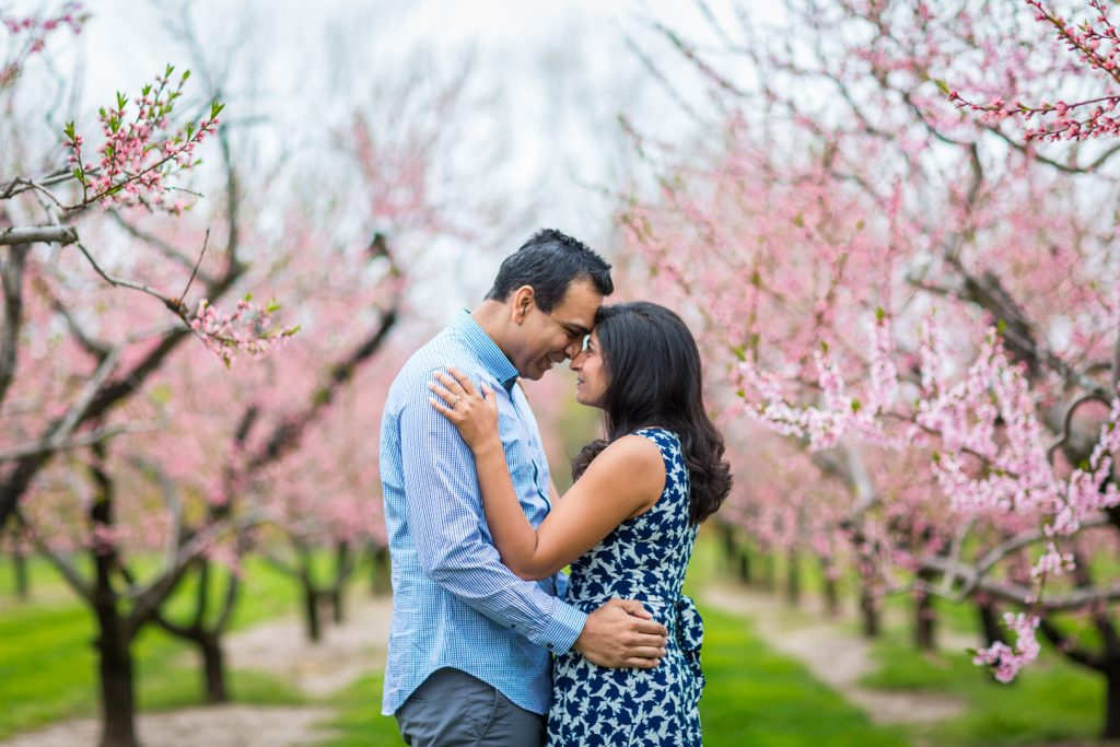 couple standing in cherry blossom trees - Niagara on the Lake Engagement Photos