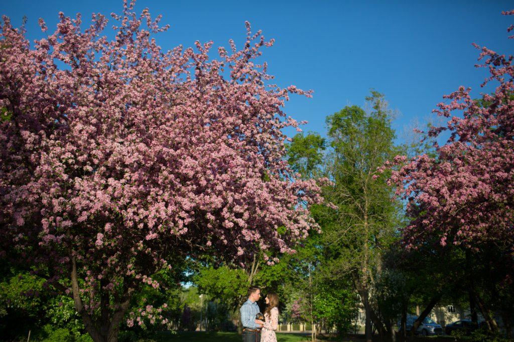 edmonton cherry blossom engagement