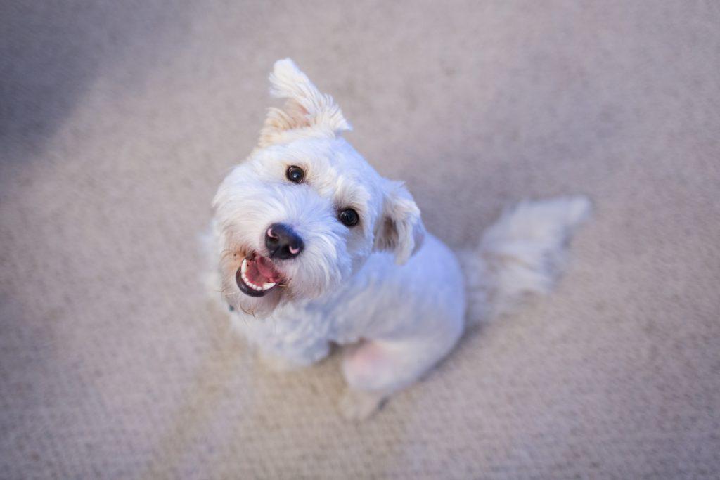 Photo of groom's dog