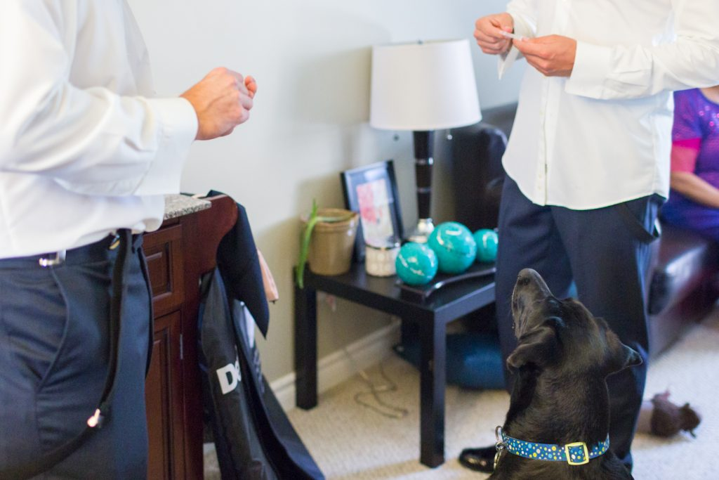 Dog helping the groom get ready