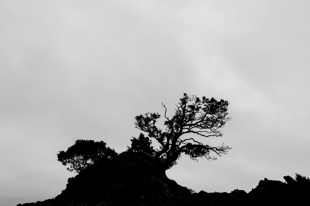 Silhouette Of A Tree While Driving the Coromandel Peninsula