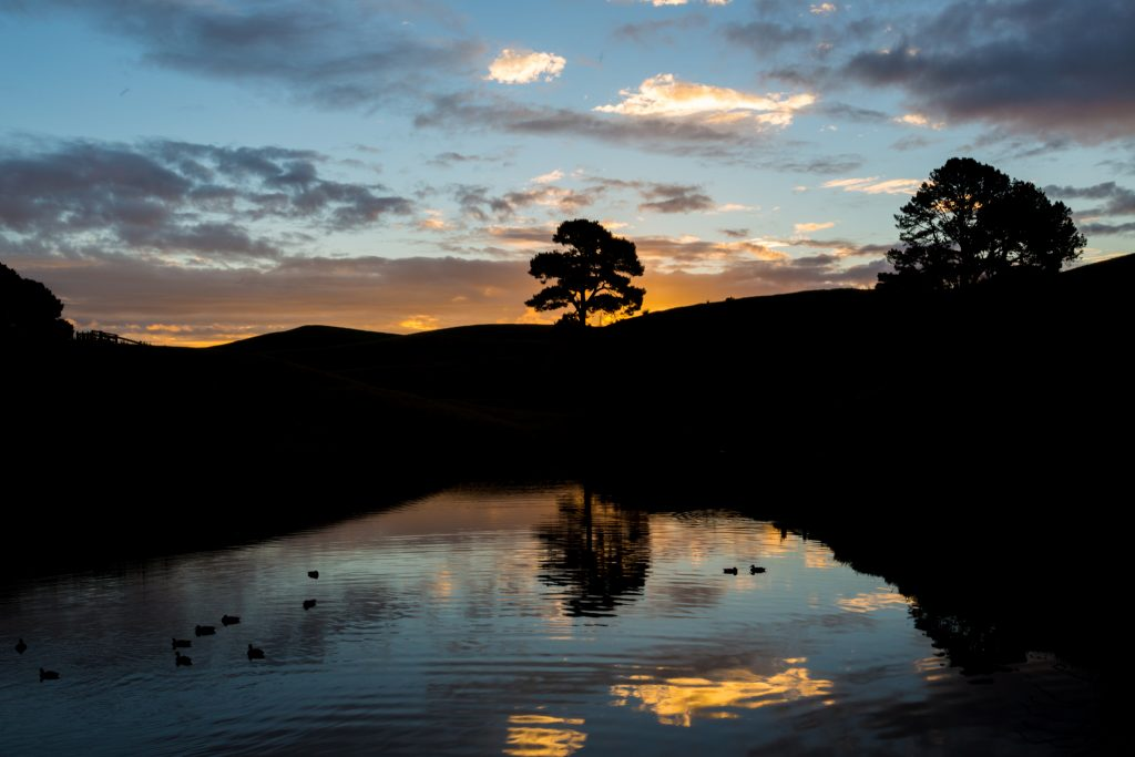 Hobbiton pond sunset ducks