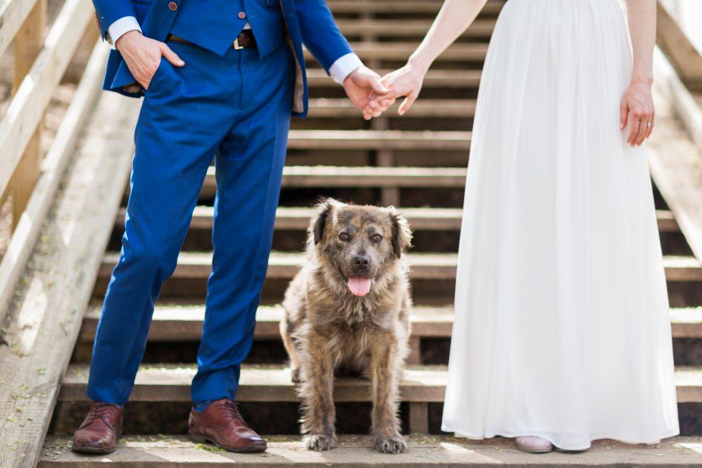 fun wedding photos with dogs